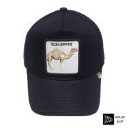 کلاه پشت تور مکس شتر